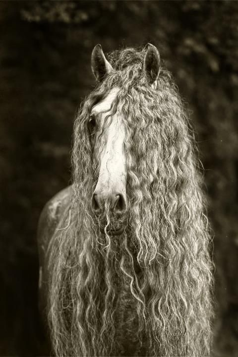 Even horses can be hippies. Peace man. / Enigmatic Equines