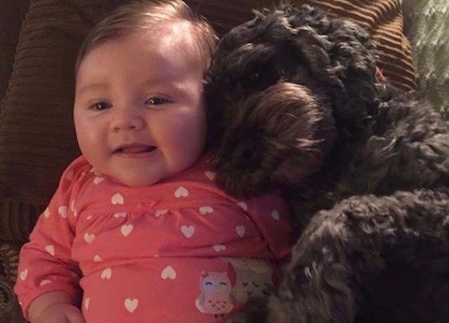 Un chien se sacrifie pour protéger un bébé âgé de 8 mois, dans l'incendie de leur demeure.
