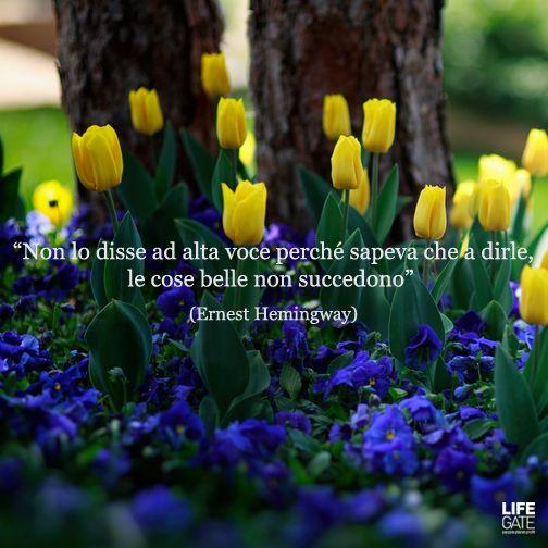Le citazioni più belle per sempre #3 - LifeGate