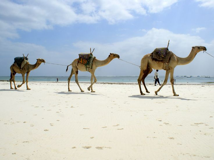 Kenya's Diani Beach, about an hour south of Mombasa, is part resort, part zoo—you'll probably spot colobus monkeys swinging around, and camels strolling, which you can hire for rides when you're not bathing in the clear sea, sunning, or perusing crafts from local vendors.