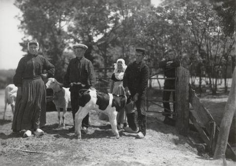 Twee mannen, een jongen en twee meisjes in Walcherse streekdracht met schapen en een kalf. Het meisje links is gekleed in haar daagse werkdracht. De jongen links en het meisje achteraan zijn gekleed in opknapdracht. 1918-1941 vanAgtmaal #Zeeland #Walcheren