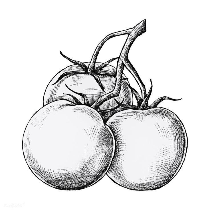 картинка помидор рисовать был влюблен актрису