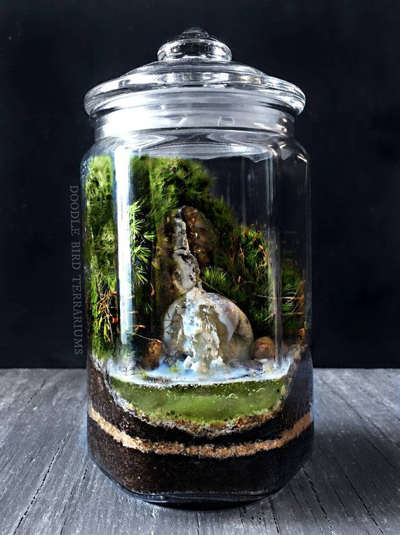Waterfall Terrarium With Live Moss Plants In Hex Glass Jar Etsy
