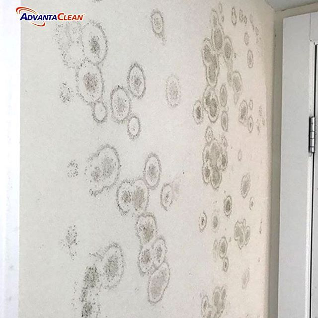 WHAT CAUSES MOLD? When tiny mold spores travel through the air and settle under the