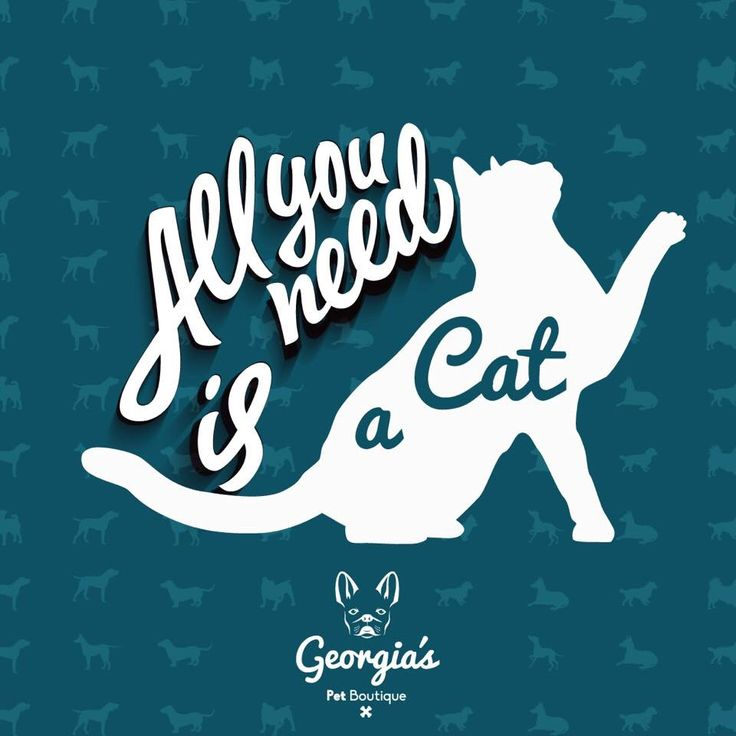 ¡All you need is a cat! Georgia's Pet Boutique