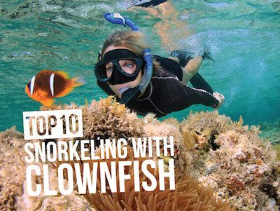 "For many people, a chance to go snorkeling with clownfish is a dream come true.  Thailand, Egypt, Maldives … of the best places to meet ""Nemo"" in the wild"