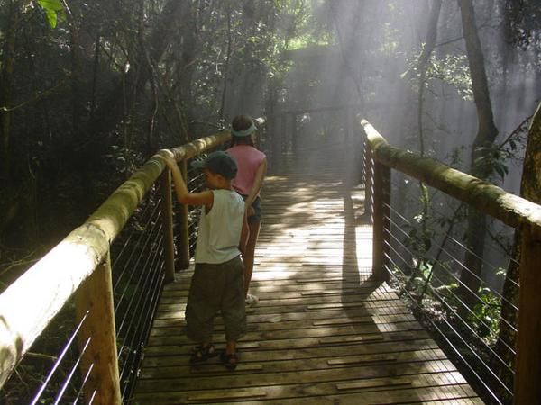 guided tours monkeyland birds of eden wildlife sanctuary attraction plettenberg bay the crags south africa