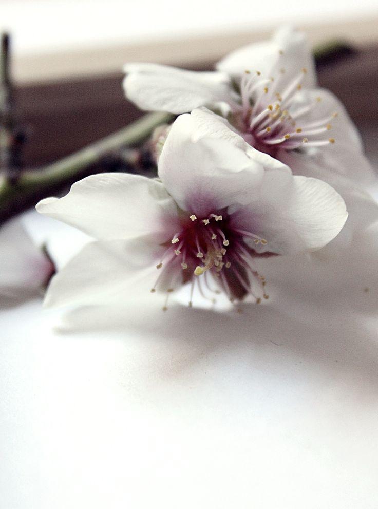 Madera y Flores 10