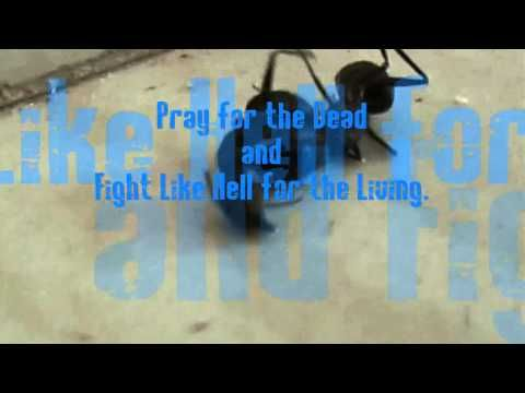 Black Ants fight like MMA Fighter - YouTube