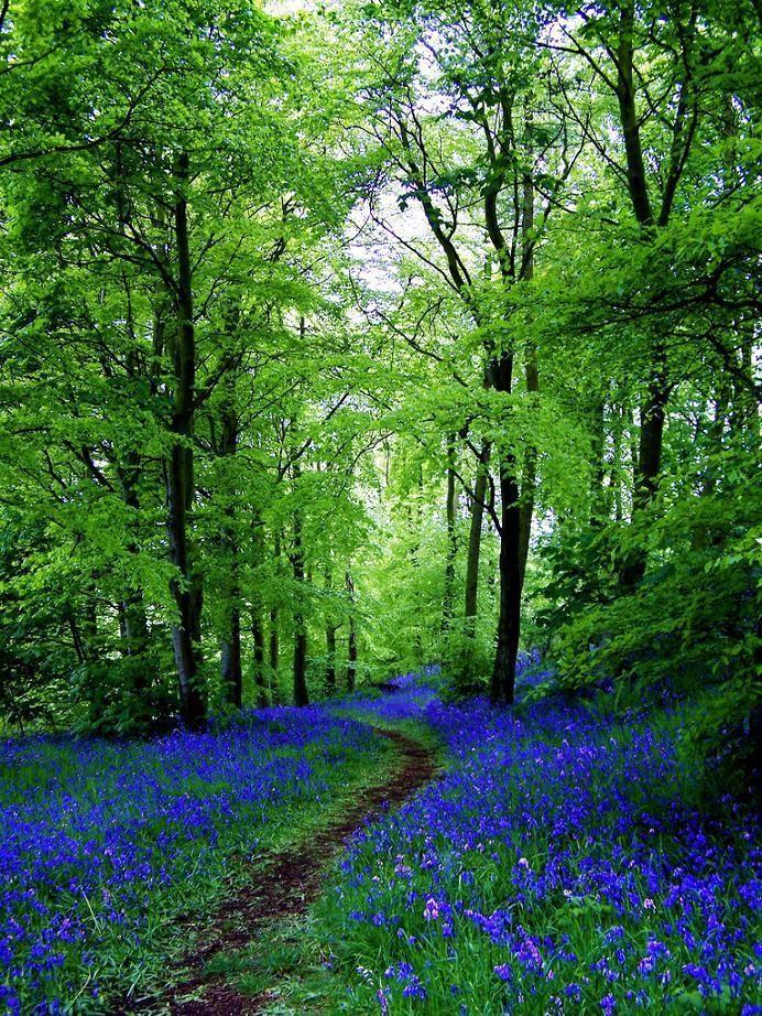 L'image du jour : Le chemin de Bluebell à Fife en Écosse