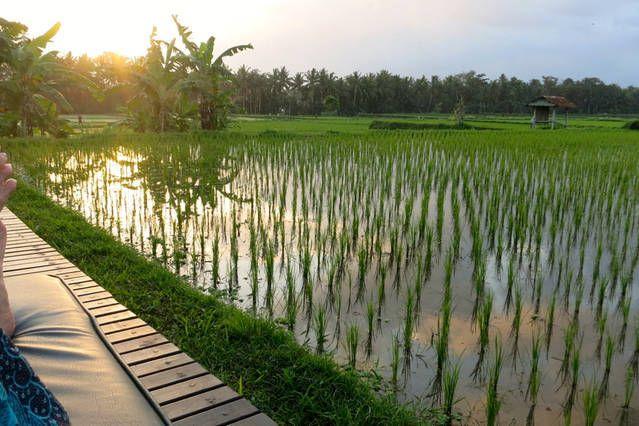 http://baliharmonyvilla.com/ Room with the perfect view Bali Harmony Villas