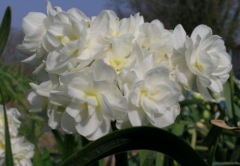 Catalogue de vente en ligne bulbes fleurs pour les for Vente de fleurs en ligne
