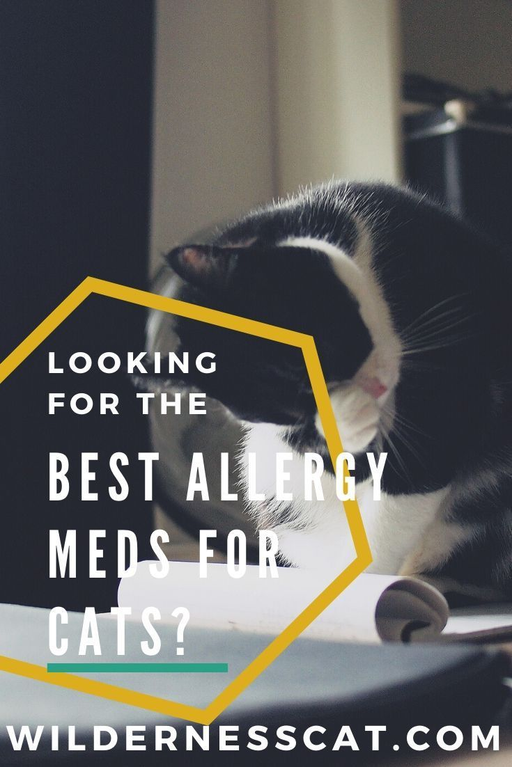 Allergy Medicine For Cats What Can I Give My Cat For Allergies Cat Medicine Allergy Medicine Cat Care Tips