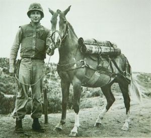 Sergeant Reckless: The $250.00 Hero.  This veterans day we salute one of our greatest American heroes, the Korean war Horse, Reckless.  Read her story here!