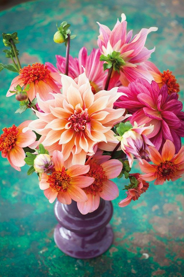 See our choice of the best dahlias - from pompom to cactus - and our guide to growing them on HOUSE - design, food and travel by House & Garden.