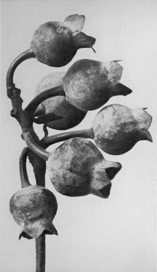 The Botanical Imagination http://usedmagazine.co.uk/post/521 The beautiful photographs of Karl Blossfeldt are currently on show at the Whitechapel Gallery.