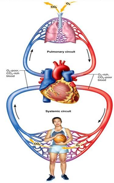 Chelation Therapy: The Key to Unclogging Your Arteries, Improving Oxygenation, Treating Vision Probl