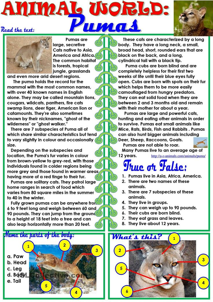 animal world pumas worksheet esl worksheet of the day by ktam april 5 2015 esl worksheets. Black Bedroom Furniture Sets. Home Design Ideas