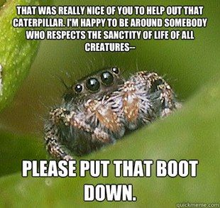 Oh man I love these spider memes. And they make a lot of sense to me too, so I guess I should really try harder to get over my problem with them.