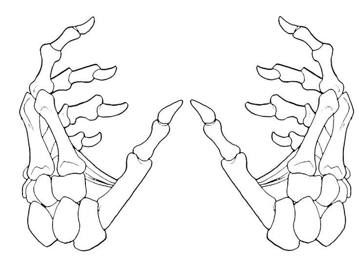 Skeleton Hands 2-1 by krazykavumaster.deviantart.com on @DeviantArt