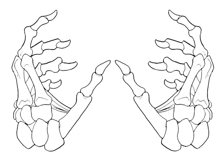 Skeleton Hands 2-1 by krazykavumaster