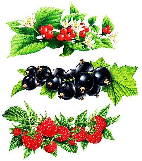 Схема вышивки «веточки с ягодками» - Схемы вышивки - 2GINTARE - Авторы - Портал «Вышивка крестом»