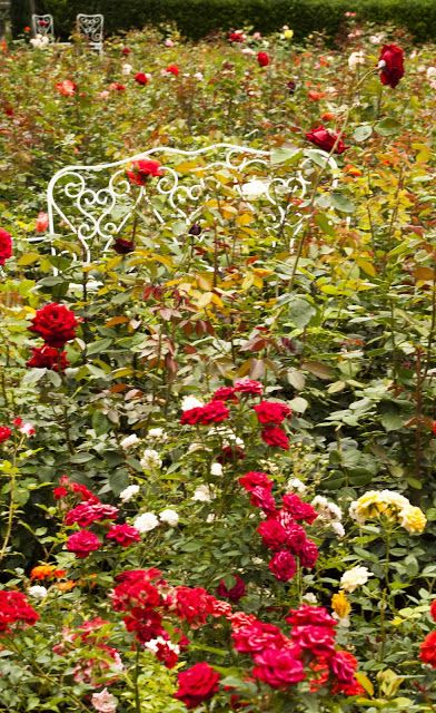A half-day trip from Zurich: exploring the Rapperswil Rose Garden