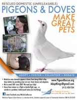 The MickaCoo Pigeon and Dove Rescue Center offers a beautiful flyer on their great website.
