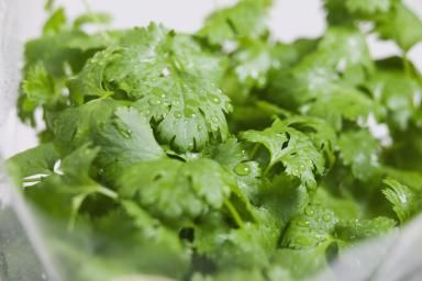 SAVING CILANTRO.   Fresh coriander leaves - Andrew Bret Wallis/Photodisc/Getty Images