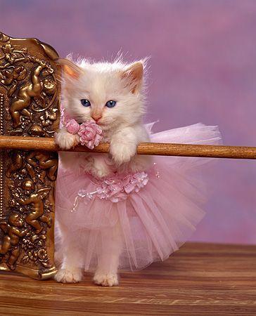 Imagem de cat, kitty, and pink
