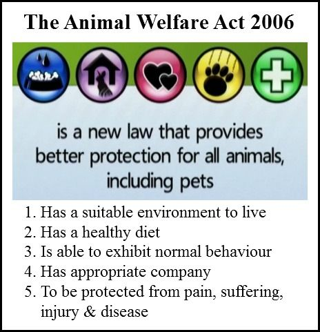 "the animal welfare act of 1998 essay Republic act no 8485 an act to promote animal welfare in the philippines, otherwise known as ""the animal welfare act of 1998"" be it enacted by the senate and house of representatives of the philippines in congress assembled."