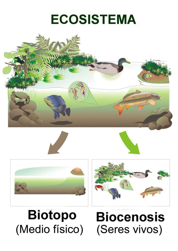educarex.es - La protección del medio ambiente