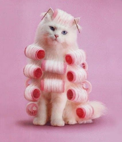 78 Best Images About Cats In Pink On Pinterest Cute Cats