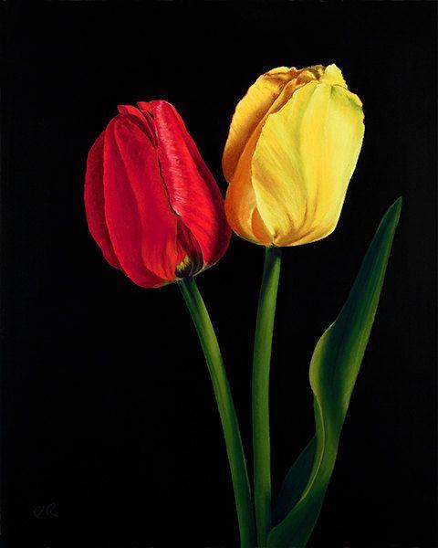 Red and Yellow Tulip Flower Fine Art Inkjet by PRPhotographyAndArt, $19.00