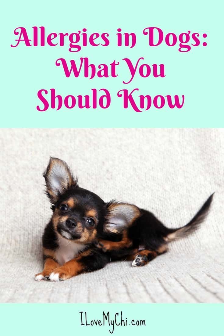 Allergies In Dogs What You Should Know Pet Allergies Sick Dog