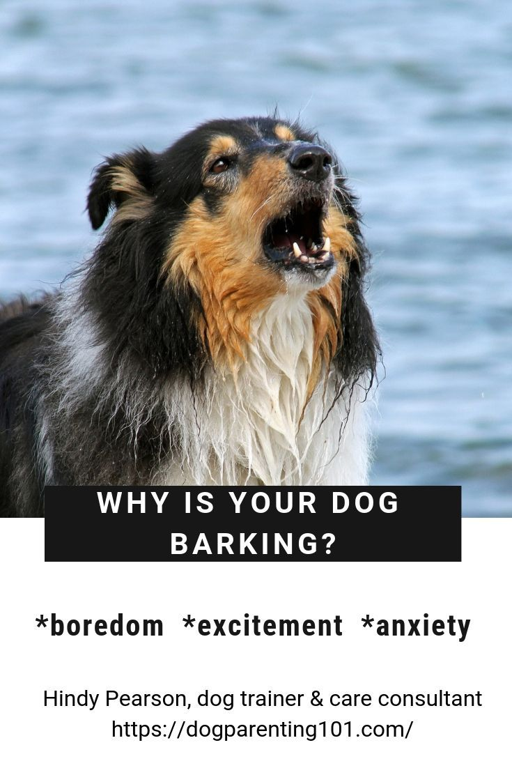 If Your Pup Is Barking Like Crazy Contact Me For Some Helpful Dog