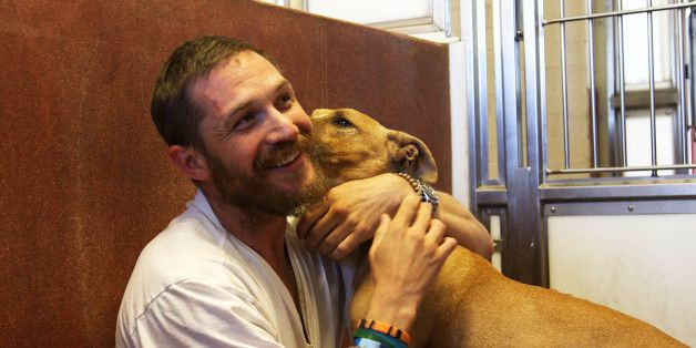Tom Hardy's Battersea Dogs Home Visit Is Screened TONIGHT!