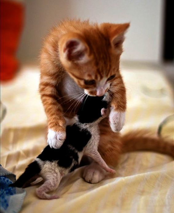 Ahh World S Cutest Cats And Kittens Book Superb Kittens