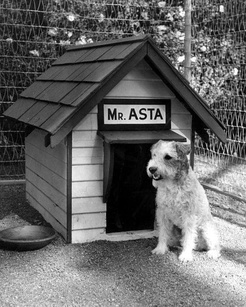 Asta from the Thin Man series--decaying hollywood mansion's