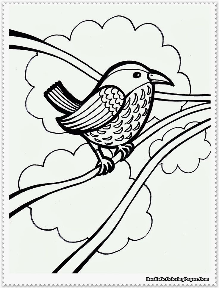 coloring pages robin tree - photo#7