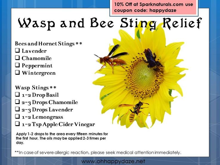 Essential oils for Wasp & Bee Stings | Essential OIls for ...