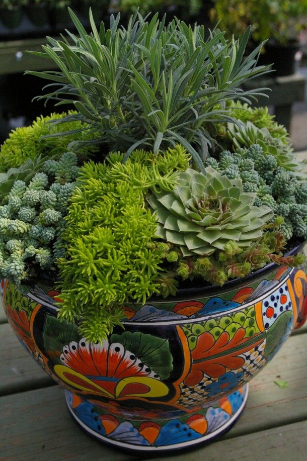 This pot transports you to another place—the Southwest. Brightly painted, glazed pots are the perfect choice to hold architectural sedums, hens n' chicks, and Euphorbia. Use it as a focal point or in a dry corner of the garden.