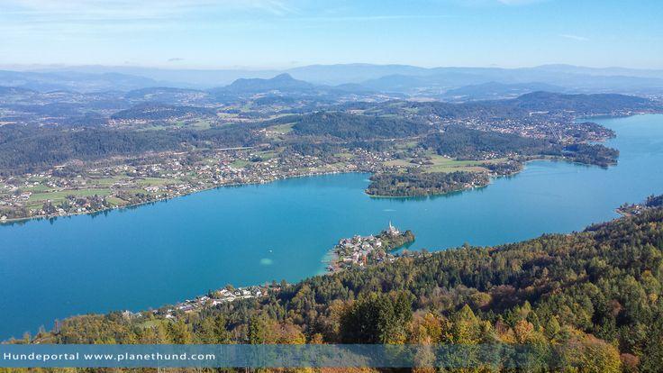 Urlaub in Kärnten mit Hund am See. Wo Hunde erlaubt sind und im Wasser baden dürfen. Tipps zum Wörthersee, Ossiacher-, Millstätter See ...