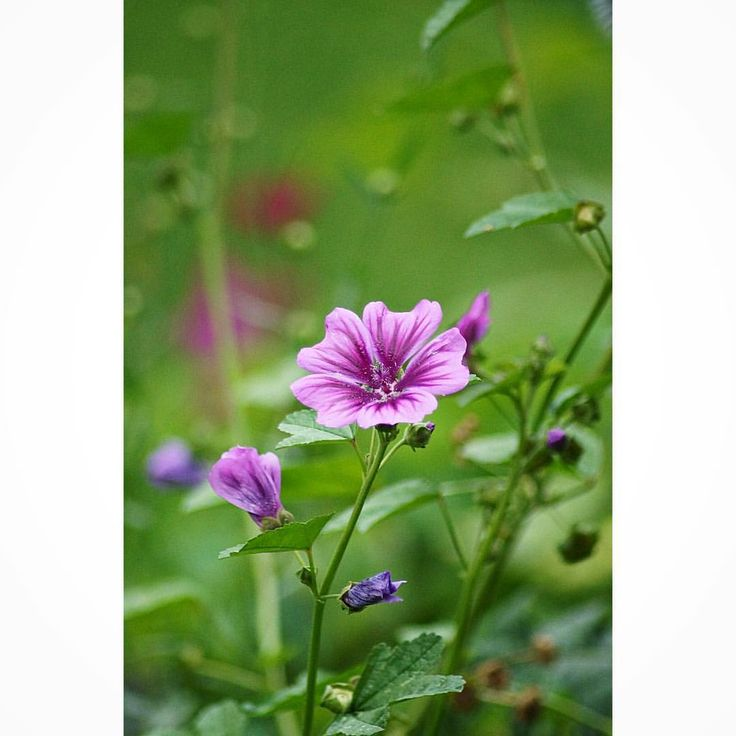 "#flower #flowersweden #excellent_nordic"""