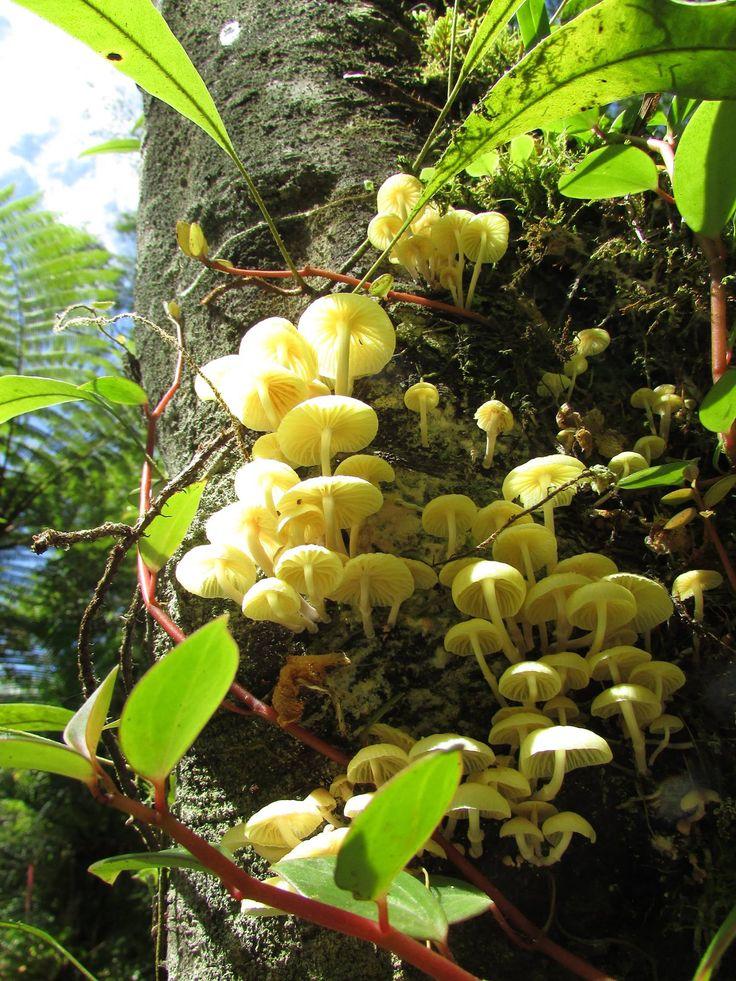 Cogumelos sobre árvore - PETAR - SP