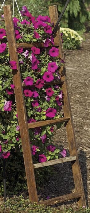 Climbing flowers on recycled ladder trellis