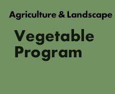 INFORMATION RESOURCE WEBSITE  University of Massachusetts Amherst | Vegetable Program