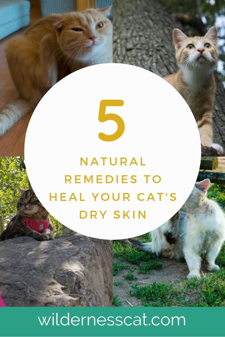Home Remedies for Cats with Dry Skin - Soothe Naturally