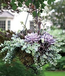 How-to: Succulents in a Hanging Basket