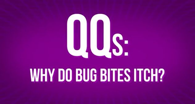 Why Do Bug Bites Itch??ref=pinp nn Hank explores a vexing question asked at picnics and beach parties everywhere: Why do bug bites itch? To help you understand the answer, he takes you into the blow by blow of a bug bite which, we warn you, is pretty horrifying. http://www.youtube.com/watch?v=itgtxHR9fyI